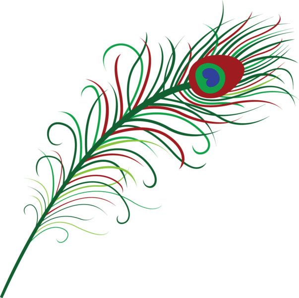 Peacock Feather illustration