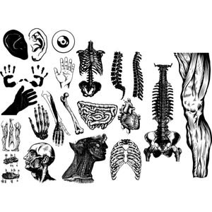 Vector Human body parts sketch illustration